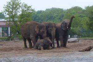 Elefantenlied