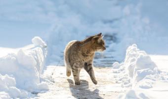 """ABC, die Katze lief im Schnee  <br /><span class=""""second""""> Kinderlied</span>"""