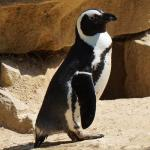"Der erfrorene Pinguin  <br /><span class=""second""> Tierbewegungsspiel</span>"