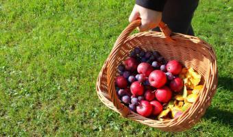 """Besuch beim Obstbauern  <br /><span class=""""second""""> Herbst im Kindergarten</span>"""