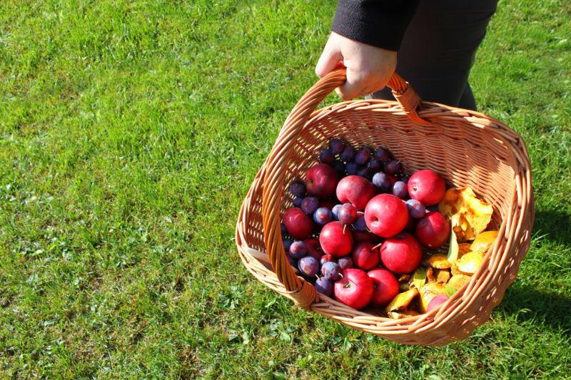 Besuch beim obstbauern herbst im kindergarten for Herbst im kindergarten