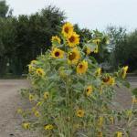 Entspannungsgeschichte: Die ersten Frühlingsblumen</span>
