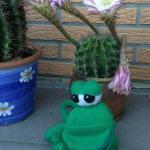 """Der kleine Frosch Paul <br /><span class=""""second""""> Frosch Fingerspiel</span>"""