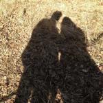 Schattenlauf