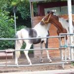 """Blindes Pferd  <br /><span class=""""second""""> Vertrauen schaffen</span>"""