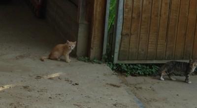 """Die Katze fängt die Maus  <br /><span class=""""second""""> Schwungtuchspiel</span>"""