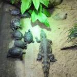 """Krokodil unter dem Schwungtuch  <br /><span class=""""second""""> Spiel für Viele</span>"""