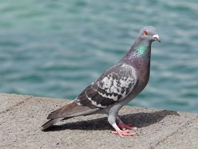 """Kommt ein Vogel geflogen <br /><span class=""""second""""> Volkslied singen</span>"""