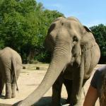 """Elefanten  <br /><span class=""""second""""> kleine Geschichte für ein Fingerspiel</span>"""