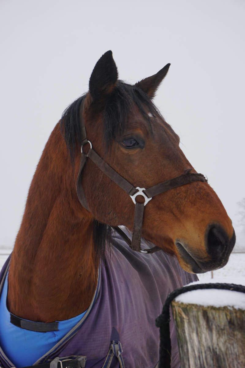 """Pferderennen  <br /><span class=""""second""""> Pferde Kreisspiel</span>"""