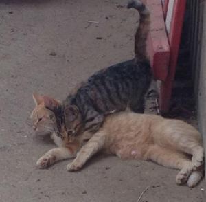 Katz und Maus Kreisspiele