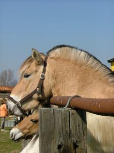Pferde Fingerspiel