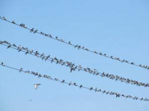 Fingerspiel Vögel