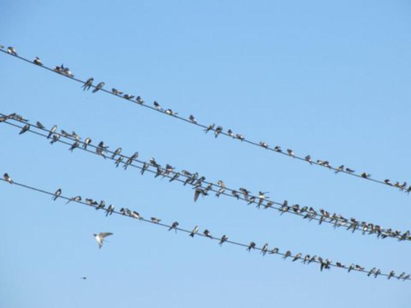 """Vögel  <br /><span class=""""second""""> ein Frühlingsfingerspiel</span>"""