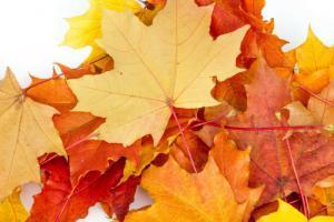 Fingerspiele Herbst: blaetter-fallen-shutterstock_536287987