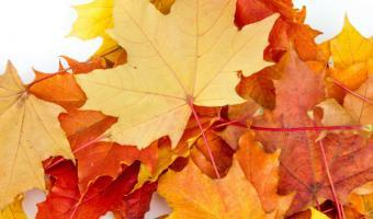 Fingerspiele über Den Herbst Für Kindergartenkinder