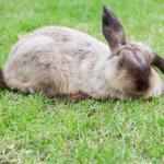 Häschen Löffelohr – ein Ostern Fingerspiel</span>