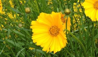 Das Samenkorn – eine bewegte Entspannung für Kinder</span>