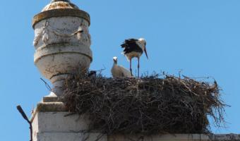 Zwei Vögel auf dem Dach</span>