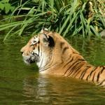 "Familie Meyer geht in den Zoo  <br /><span class=""second""> Tierbewegungen spielen</span>"