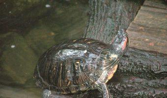 Schildkröten Bewegungsspiel